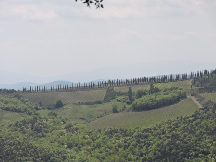 panorama_cyprysy_moja_toskania_montalcino