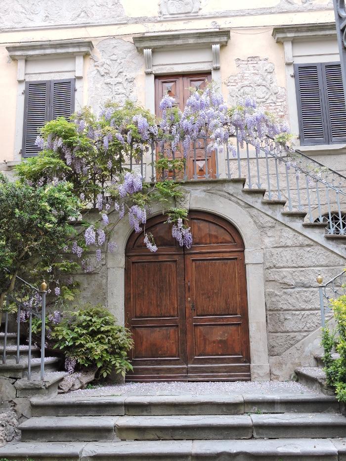 wisteria_peccioli_moja_Toskania