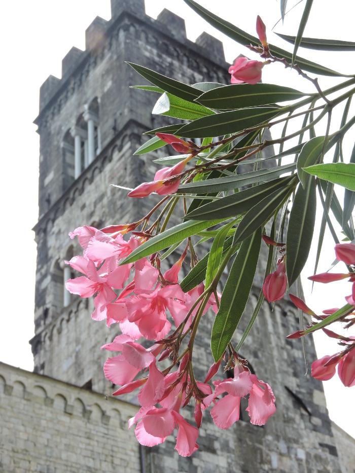dzwonnica_moja_toskania_barga_kwiaty_rozowe