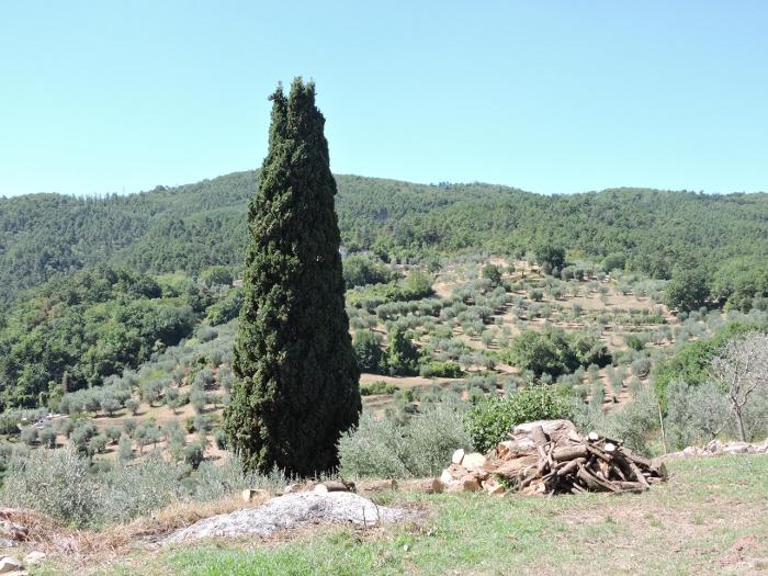panorama_vinacciano_moja_toskania