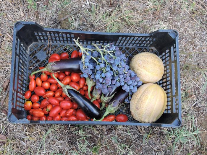 skrzynka_z_warzywami_i_owocami_moja_toskania
