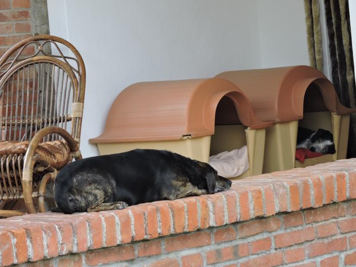 spiace_psy_moja_toskania