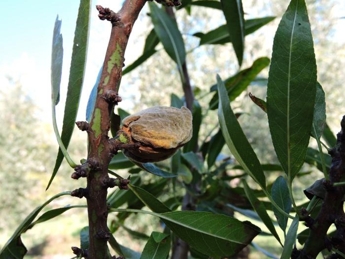 migdal_na_drzewie_moja_Toskania