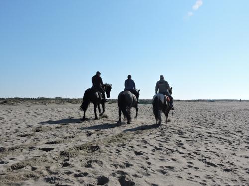 konie_na_plazy_moja_toskania