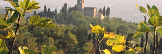 Kasztany w Lupicciano