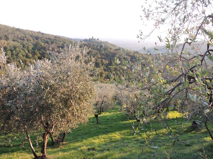 trawa_w_lupicciano_moja_toskania