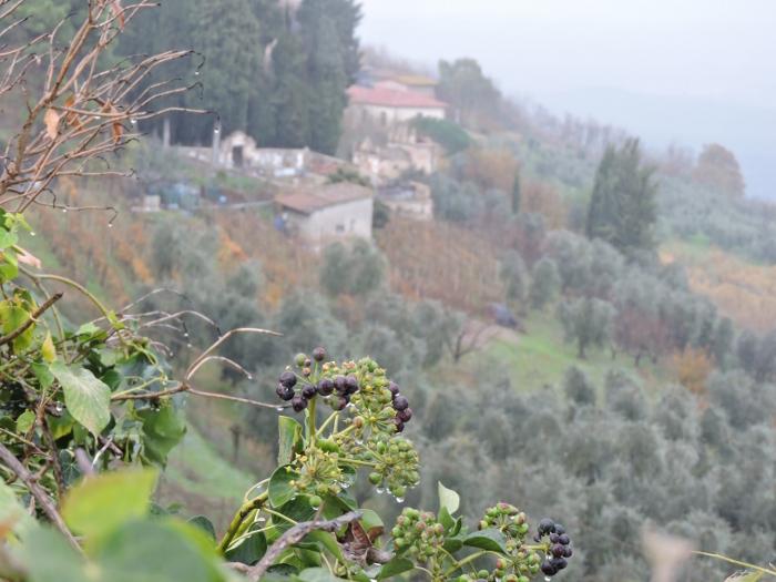 cmentarz_toiano_z_daleka_moja_Toskania