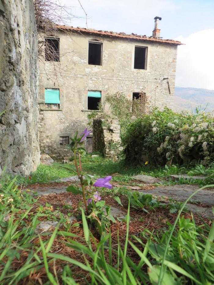 kwiat_opuszczony_dom_colognora_di_pescaglia_moja_toskania