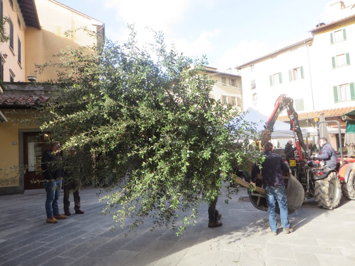 plac_sali_drzewa_zabierane_moja_Toskania_pistoia