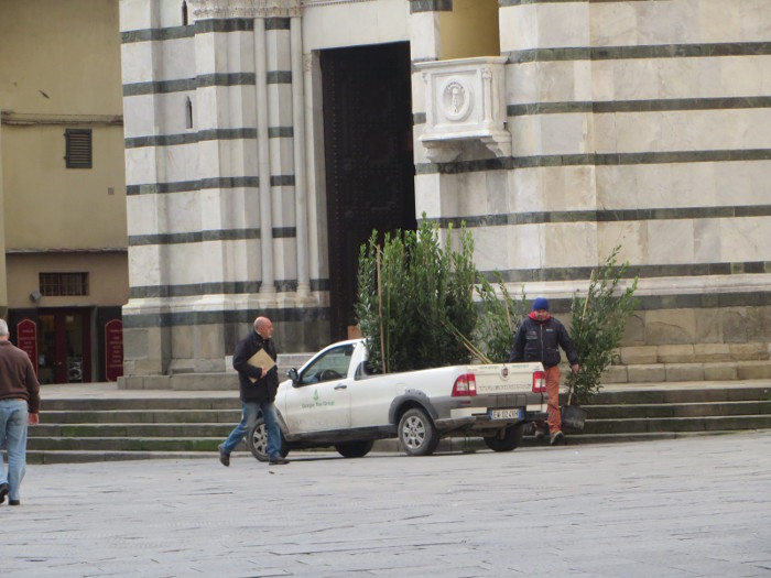 zabieranie_drzewek_z_placu_moja_toskania