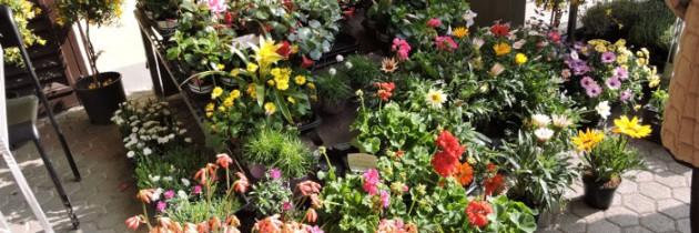 Vicofaro wiosennie