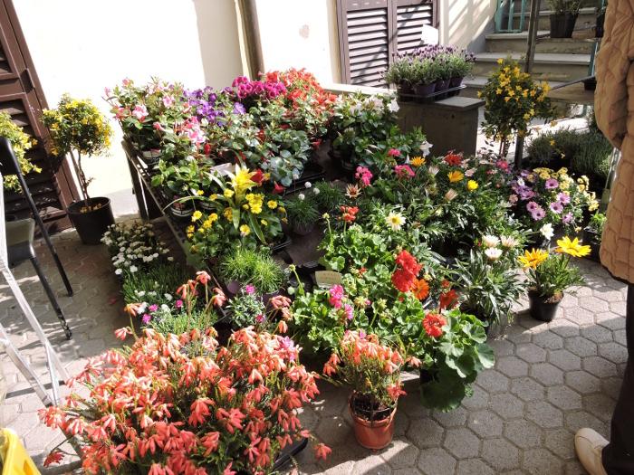 kwiaty_vicofaro_moja_toskania