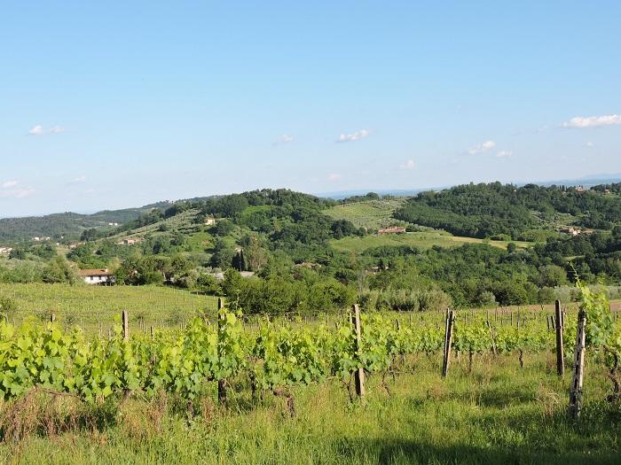winnice_moja_toskania
