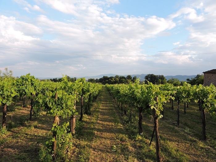 winnice_pontenuovo_moja_toskania