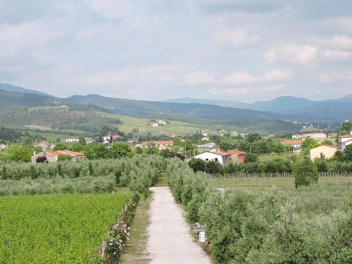 winnice_z_gory_moja_toskania