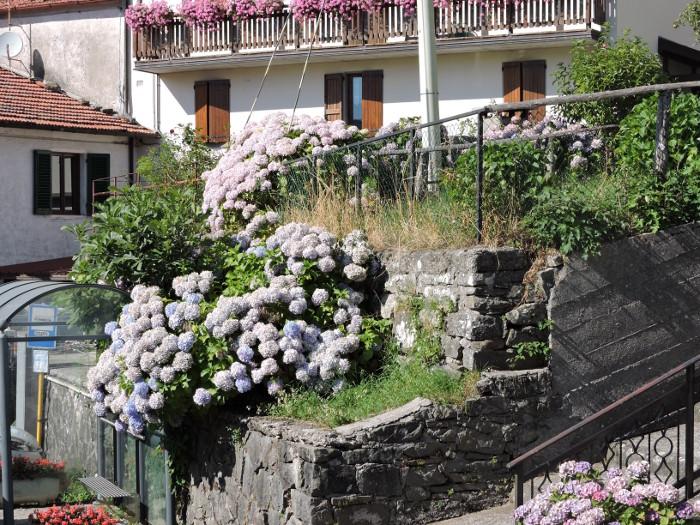 fioletowe_kwiaty_moja_Toskania