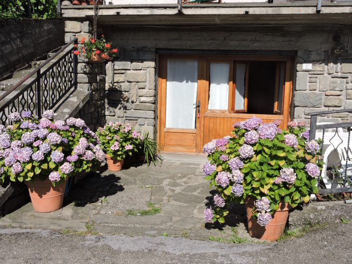fioletowe_kwiaty_przed_domem_melo_moja_toskania