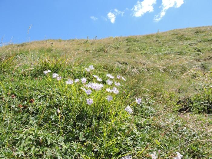 kwiaty_gory_moja_toskania