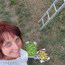 Owocowe zbieranie