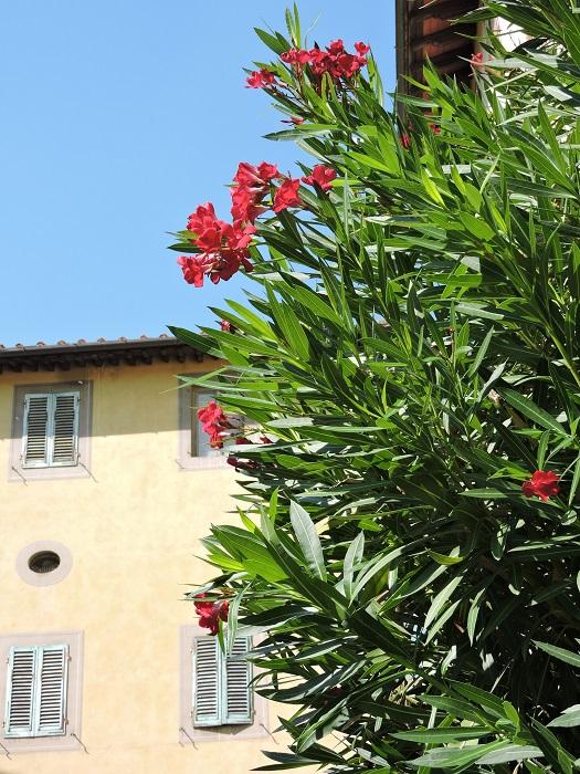 czerwone_kwiaty_na_zielonej_sali_moja_toskania