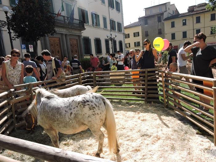 konie_zielona_pistoia_moja_toskania