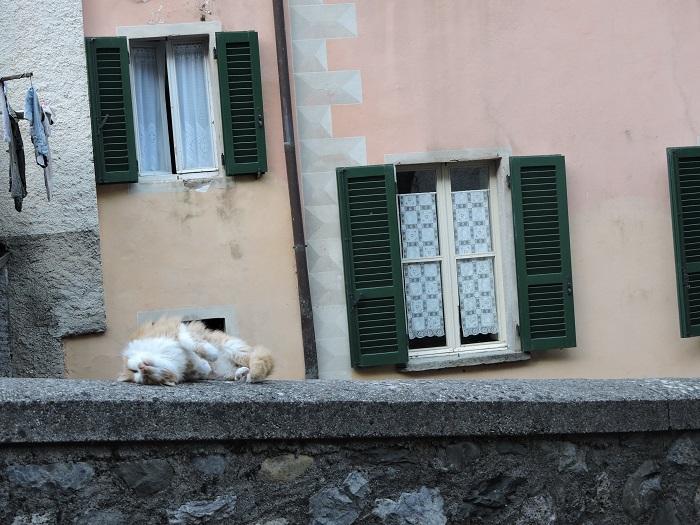 odpoczywajacy_kot_moja_toskania