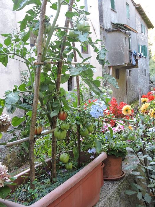 pomidory_fornovolasco_moja_toskania