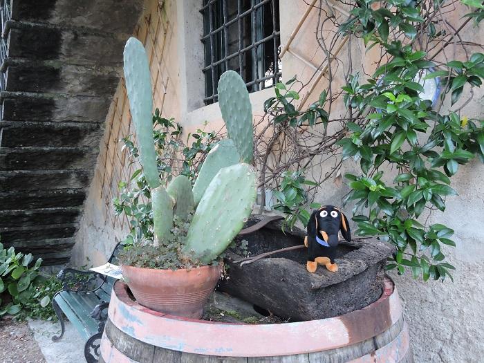 francy_przy_kaktusie_moja_toskania