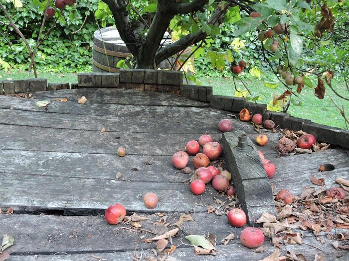 jablka_moja_toskania