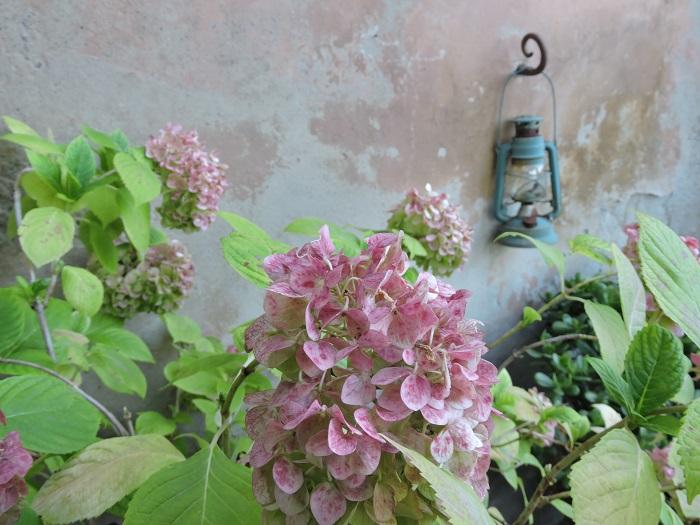 kwiaty_latarenka_moja_toskania