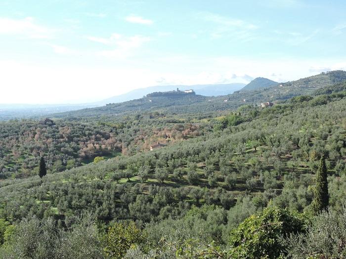 panorama_cecina_moja_toskania