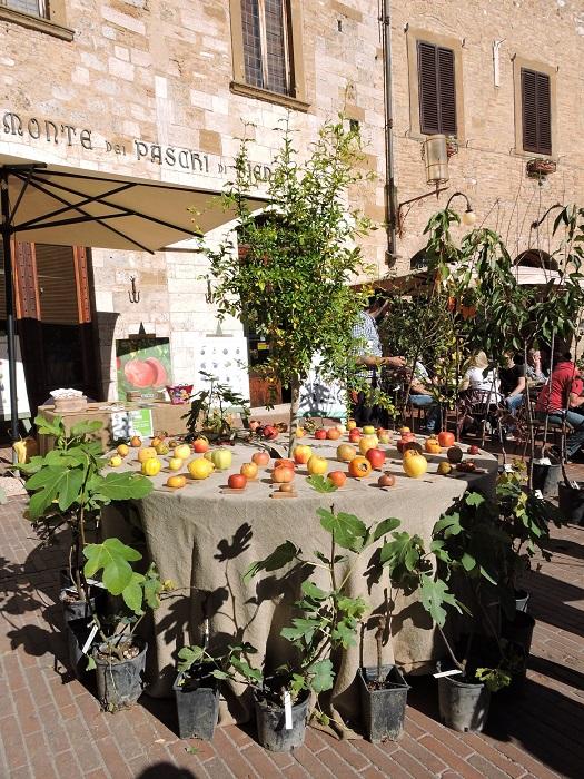 jablka_na_stole_san_gimignano_moja_toskania