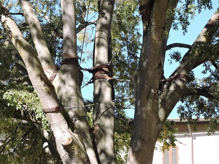 lancuchy_na_drzewie_moja_toskania_san_gimignano